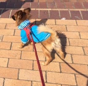 ソルビダミックス犬